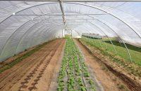 Antibiotika im Gemüse