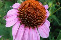 Pflanzenwesen und Heilkraft